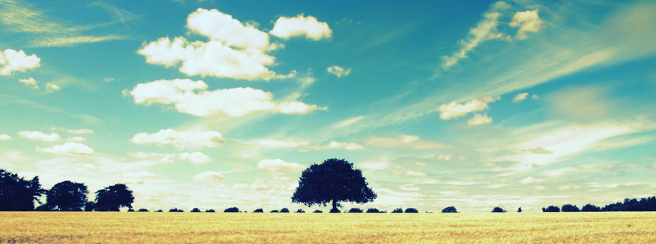 Lone tree on wheatscape horizon